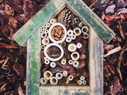 Bug Hotel – Workshop Review – Prep – Faiers M, Mrs (Head of Science)